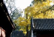 秋游鹫峰国家森林公园