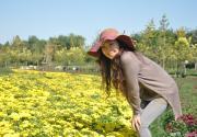 2011年顺义国际鲜花港菊花节