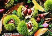 2014怀柔区第二届板栗文化节暨水长城金秋游园会月底开幕