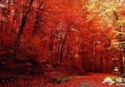 2014圣泉山红叶节 红林尽染红叶节 赏景登高来圣泉