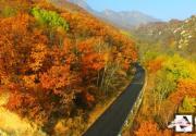 航拍京郊原始森林秋日层林尽染 山林披上绚丽外衣