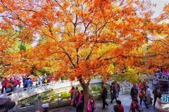 北京红叶引游人