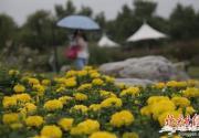 世界花卉大观园花车巡游将起航 童话故事主题带您回童年