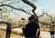你等的大興梨花節來啦!一圖玩轉大興梨花旅游文化節!