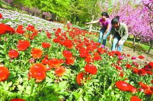 香山公园邀您看山花