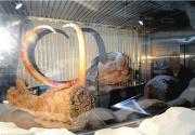 冰封万年猛犸象真身首次在大陆地区展出