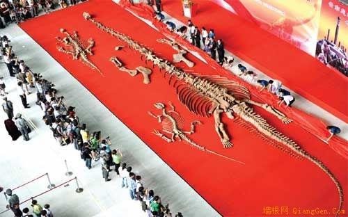 中国科技馆新馆迎来3具恐龙化石(组图)
