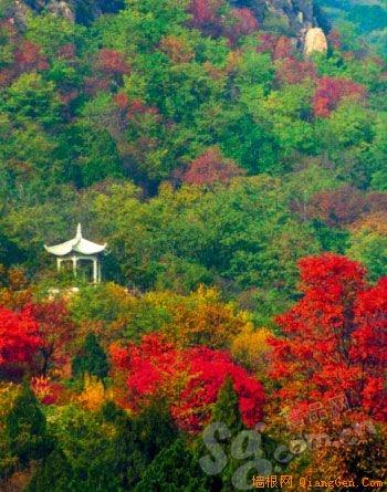 最美十月 食色京郊