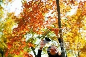 枫叶红了 北京最佳观赏公园推荐