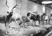 国家动物博物馆――一座静止的动物园