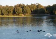 动物园陶然亭湖面今夏更清澈