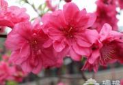 京郊花开何处:做一个从容的赏花人