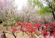 赏花登山赏美景 触摸北京迷人春色