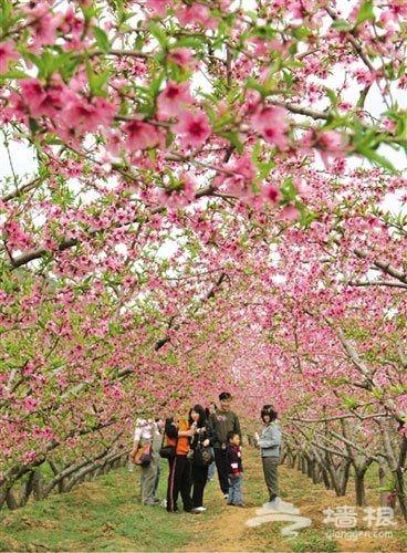 花花世界 北京春季赏花预习手册