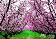 呼朋唤友 去京郊看花赏景