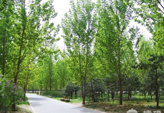 五二 东小口森林公园游记
