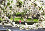 抓住春天尾巴 北京夏季之前最后的赏花地