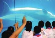 极地白鲸京城见客