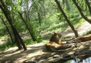 大兴野生动物园 感受动物们的自然与野趣