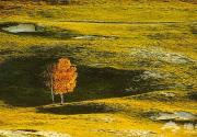 沽源:壩上草原仙一般的美
