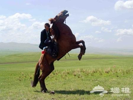 策马扬鞭 北京周边最适合骑马的七大草原[墙根网]