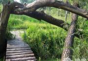 北京夏季特色湿地公园大推荐