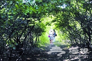 夏日看海赏绿意 浑黄渤海湾里的青翠菩提