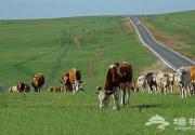 贡格尔草原 内蒙古那片盛产皇后贵妃的草原