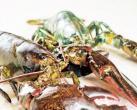 京城龙虾生猛 盘点环球吃法N+1