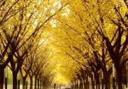 秋高气爽 秋游京城必赏的四大美景