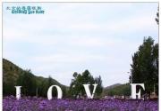 中国的普罗旺斯:紫海香堤香草艺术庄园