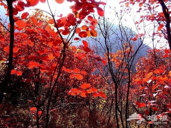 新鲜赏红体验 京郊秋色怀柔别样红[墙根网]