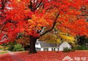 下周进入最佳观赏期 香山红叶今年最红