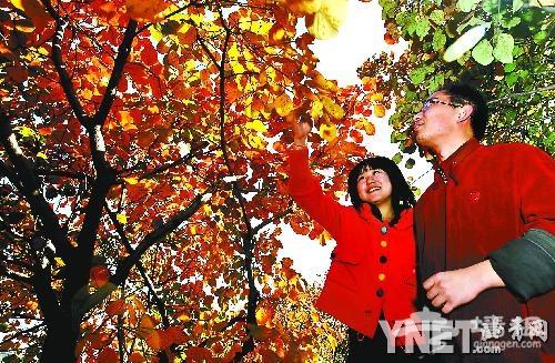 八达岭33万亩彩林进入最佳观赏期
