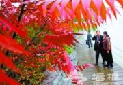 2015北京:十大景观区串起京郊彩色长廊