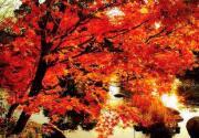 京郊秋暖人欢喜 九地秋色夺人心魄