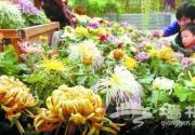 世界花卉大观园捧出千菊盛宴