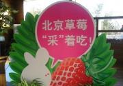 """草莓""""采""""着吃 2011北京草莓季启动"""