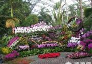 北京植物园:第七届北京兰花展
