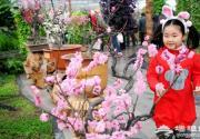 北京世界花卉大觀園梅花鬧春