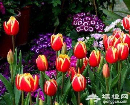 京城春色满城