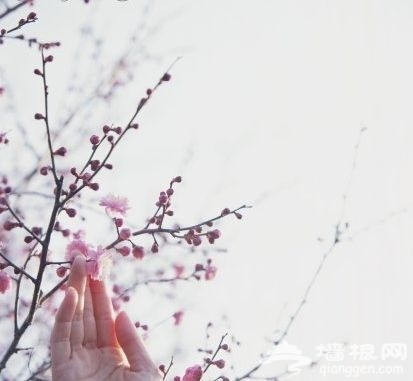 踏雪寻梅 京城六大赏梅胜地推荐