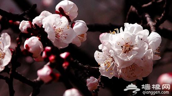 走进花花世界 京郊踏春赏花