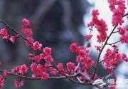 春天里 沿着北京地铁新线踏春