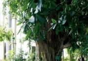 闻香入室寻春花 北京必去的花卉温室
