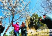 北京植物园2011年桃花节拉开帷幕