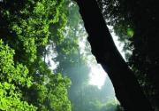 雨林迷城 触摸西双版纳原生态之美