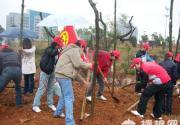 """云蒙山2011年""""我为森林添风采""""植树之旅活动"""