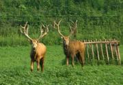 南海子麋鹿苑 与小鹿亲密接触