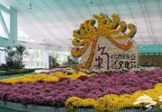 2011北京国际鲜花港秋季菊花展将给力国庆节